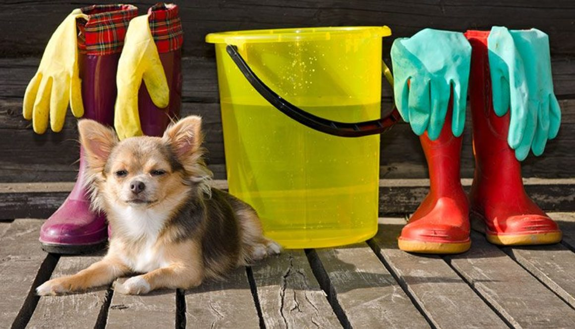 Spring-cleaning-tips-for-dog-owners (1)