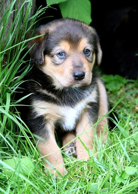 puppy-557829_640